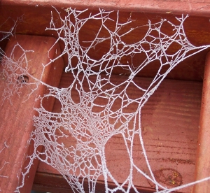 Frost on a spider's web