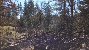 Clearing deadwood and building trails