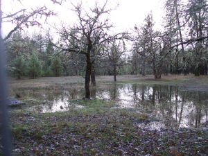 Vernal pools forming in the back pasture after a heavy rain